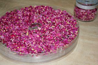 Приятным бонусом при сушке роз в электросушилке станет тонкий аромат, растекающийся по комнате