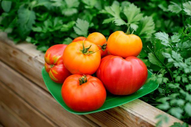 Мои секреты выращивания отличных томатов