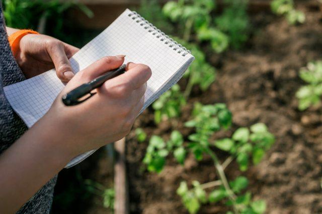 Имея информацию о заморозках и сроках созревания, можно рассчитать, когда начинать сеять овощи для осеннего огорода