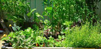 Овощное общежитие — мой опыт смешанных и конвейерных посадок