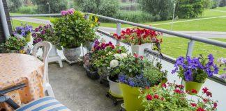 Как устроить контейнерный сад на балконе
