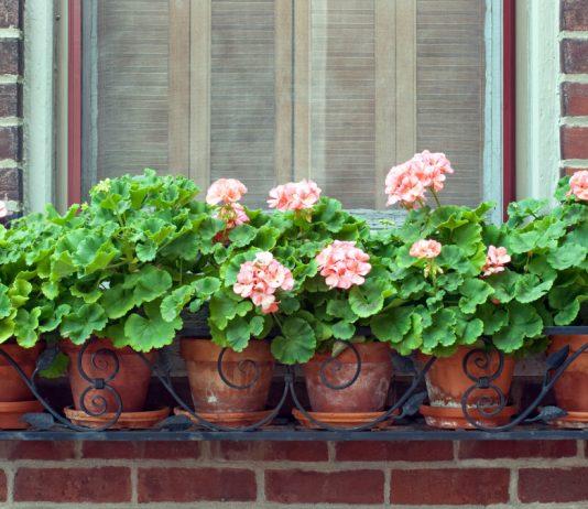 Цветы за окном квартиры