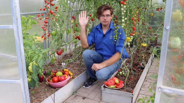 Какие сорта томатов выбрать для теплицы и открытого грунта?