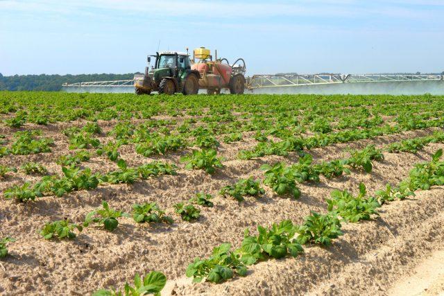 В промышленном выращивании картофеля альтернативы химическим методам борьбы с фитофторой нет