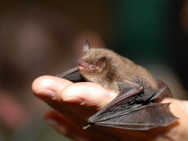 Если к летучим мышам не лезть — они совершенно безобидны