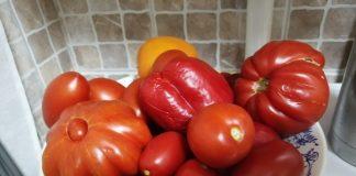Мои любимые помидоры