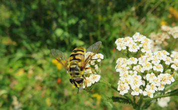 14 самых полезных насекомых вашего сада
