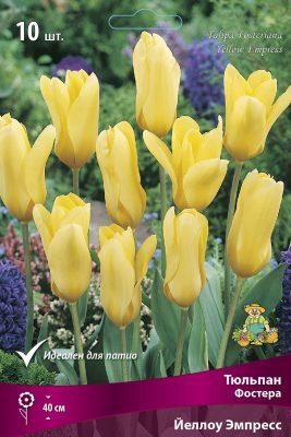 «Тюльпаны Фостера»
