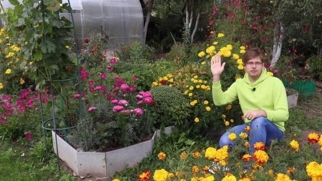 Как собрать семена цветов правильно?