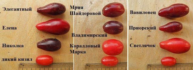 Сравнение ягод кизила разных сортов