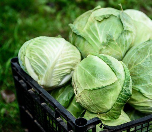 Когда собирать урожай капусты и где хранить?