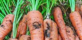 Кто грызёт наши овощи и как с этими вредителями бороться?