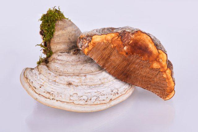 Все грибы надо измельчить и хорошо просушить