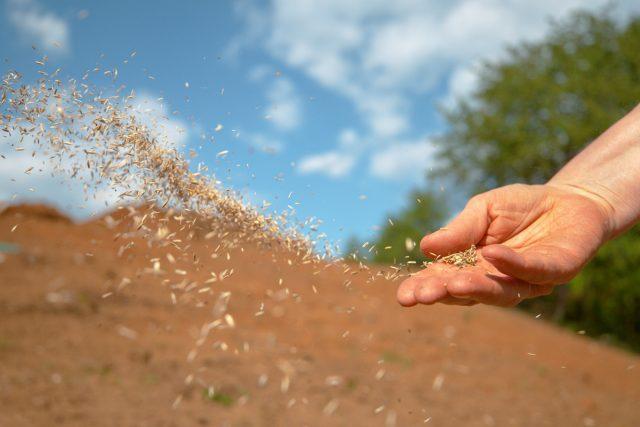 Многолетние сидераты сеют, как минимум, на 2-3 года, а иногда оставляют до 5 и более лет