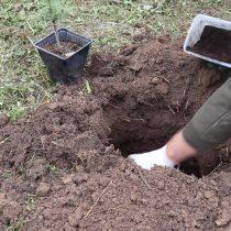 Подготовьте яму для посадки