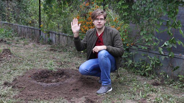 Сажаем кедр в саду: правила выращивания хвойных растений на участке