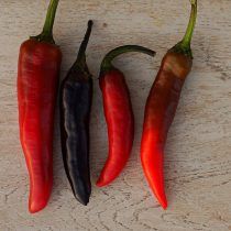 Перец «Мурасаки Тогараши Ямато» (Murasaki Purple Pepper)