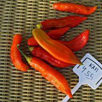 Перец «КАП 455» (Baccatum Pepper CAP 455)