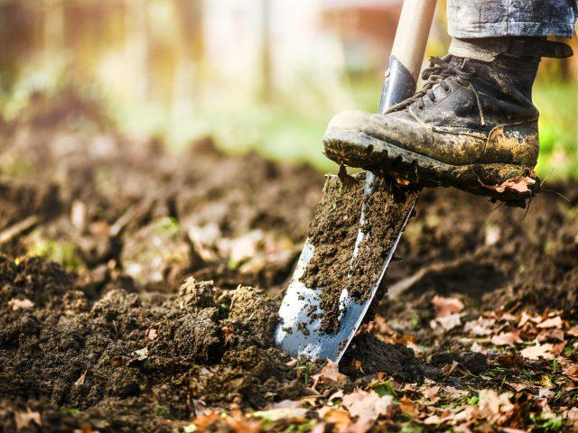 5 осенних работ с почвой, чтобы значительно улучшить её за зиму