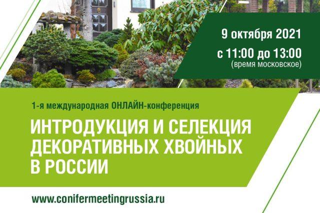 Онлайн-конференции о декоративных хвойных в России