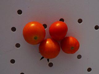 Ампельный томат «Ред Профьюжен» (Red Profusion)