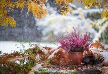 Лунный календарь садовода и огородника на ноябрь 2021
