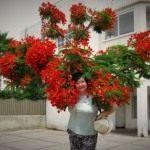 Картинка профиля Любительница Цветов